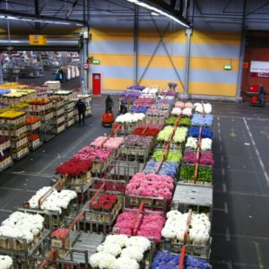 Wholesale & Retail Operations